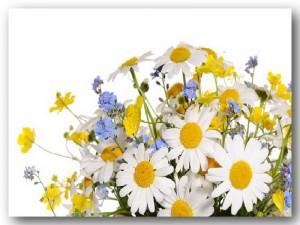 Frühlings-Aktion