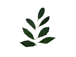 Lorbeer-Blätter